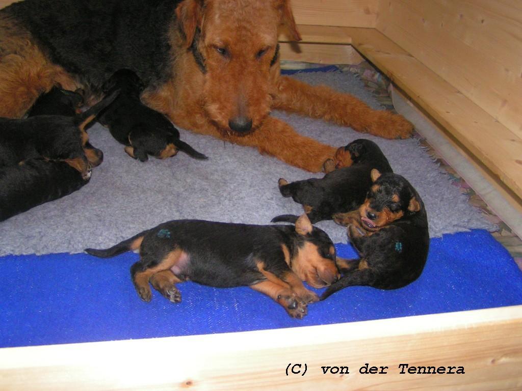 http://www.von-der-tennera.com/wp/wp-content/uploads/PICT0024-Kopie.jpg