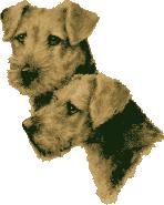 Airedale Terrier von der Tennera